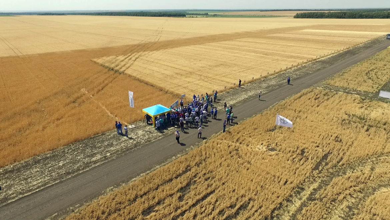 День поля по зерновым — 22 июня 2018