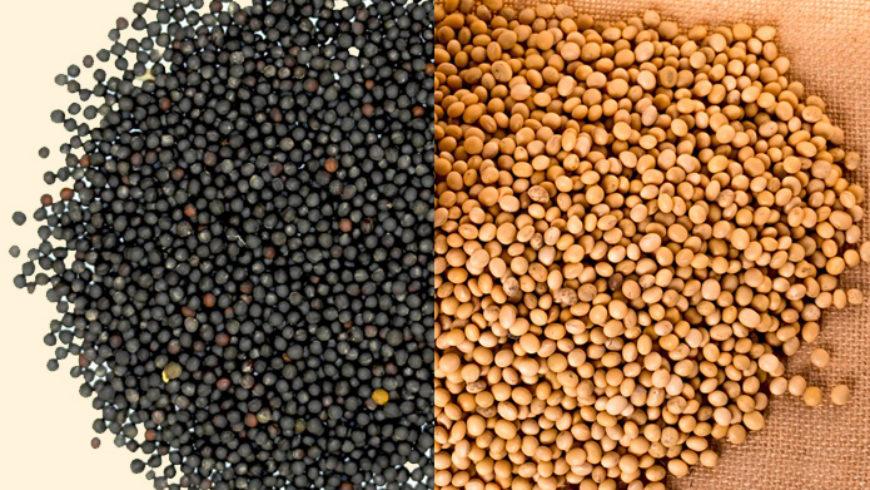 Президент намерен подписать закон по экспортному НДС на масличные